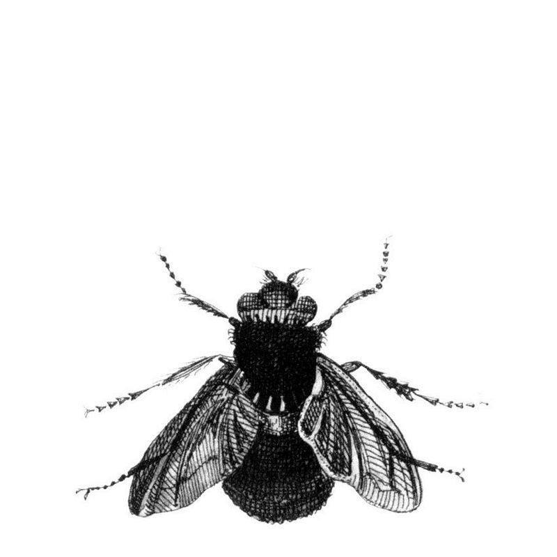 kalotaranis.gr-ταπετσαρία,προσφορά,stock house,μύγα