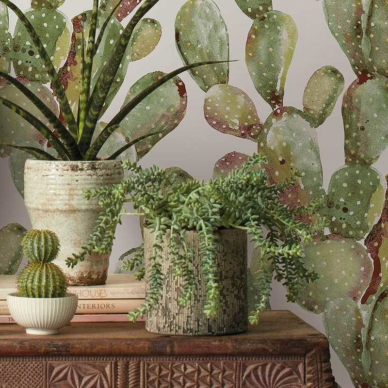 kalotaranis.gr-peel and stick wallpaper,decoration,cactus